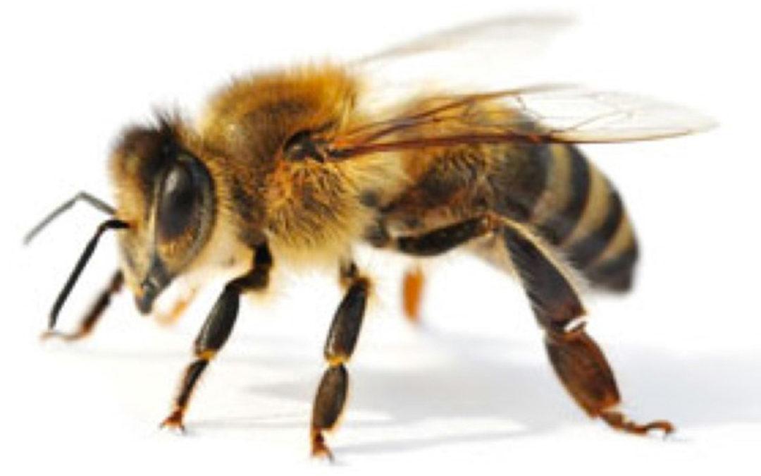 Bauern am Insektensterben unschuldig